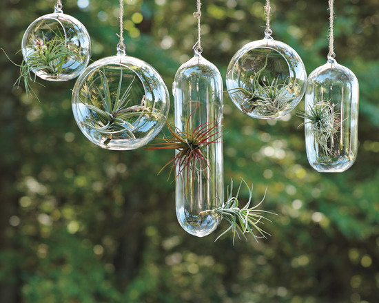 cozy-air-plants-looks-great-for-your-exterior-design