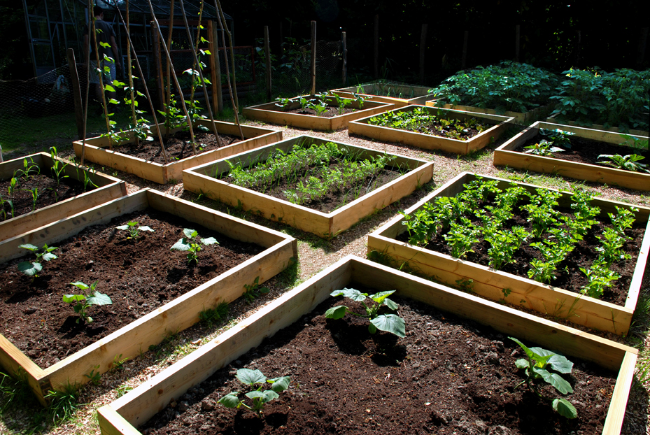 vegetable_patch_june_21