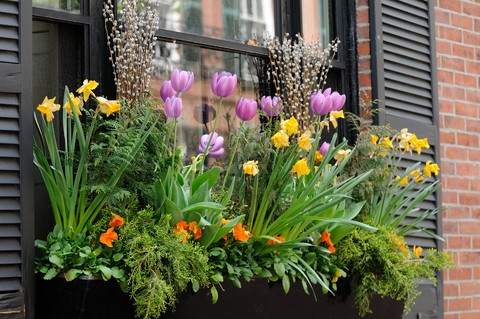 planting-window-boxes